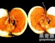 蘋果霉心病的發生與防治