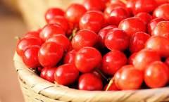 大樱桃优质丰产栽培综合管理技术