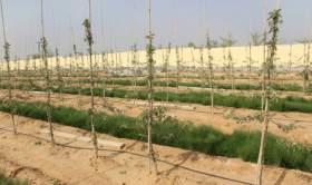 第24期-《幼树的土肥水管理》-杨增生