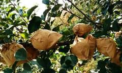 2017年套袋苹果园优质丰产病虫害防治历