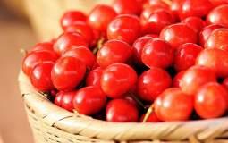 大樱桃早果丰产优质栽培技术
