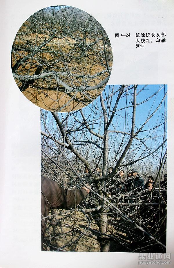 4-24.jpg
