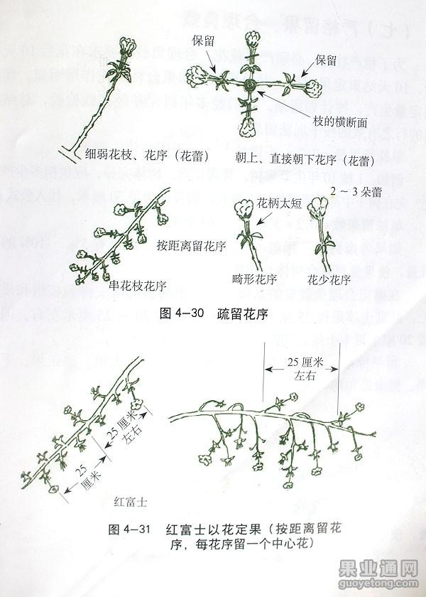 4-31.jpg