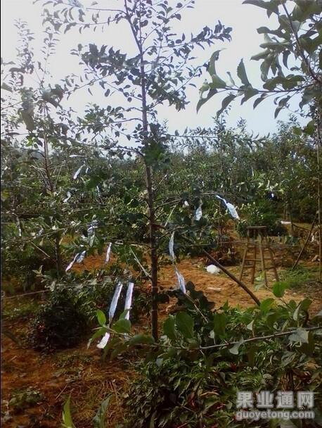 第24期《新栽幼树土肥水管理》——杨增生 互动内容