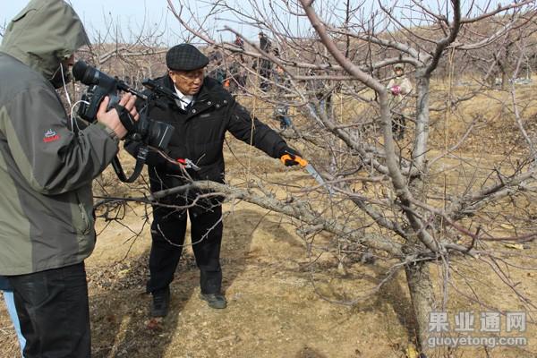 对于红富士苹果树,你采用的什么修剪手法!