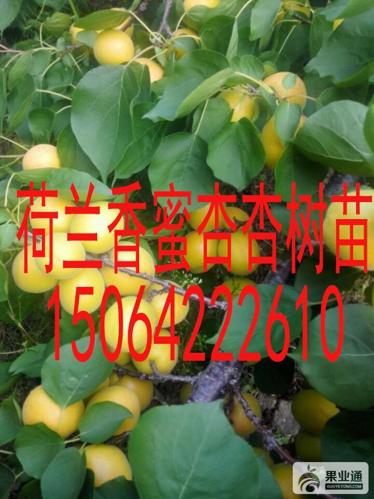 thumb_5859d1a9f33946.jpg