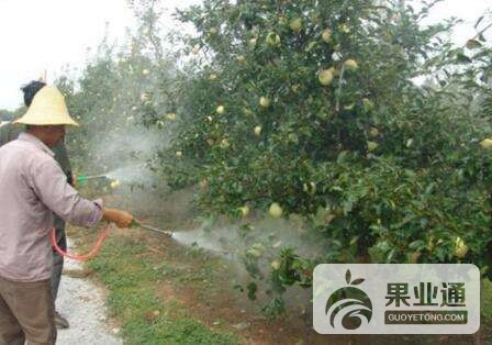 第19期《蘋果采收前后果園管理(二)》—劉增魁 互動內容