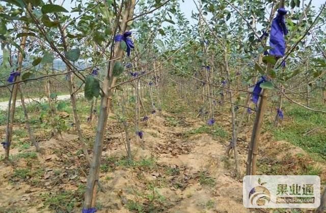 第23期《幼樹栽植時間和樹形選擇》——劉增魁 互動內容