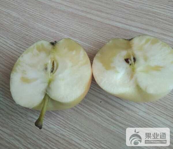 权威发布:苹果水心病发病机理及防治方法!