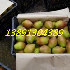 梨-红香酥梨框子2.JPG