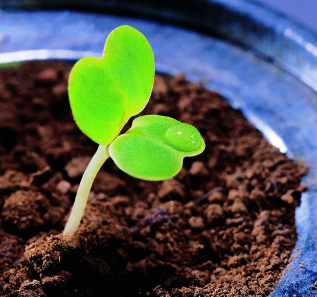 """践行""""减肥增效"""" 须推广新型肥料"""