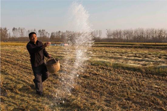 肥料在土中溶解慢是什么原因?是质量不好吗?