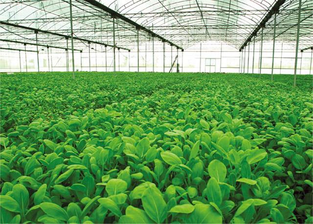中央财政:支持区域生态循环农业发展