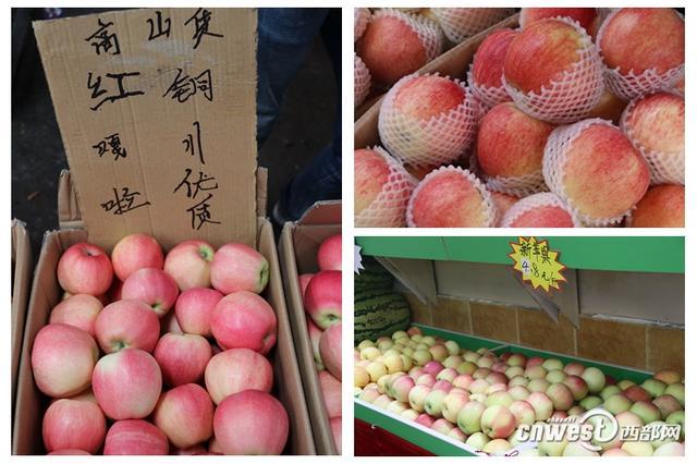 陕西早熟苹果:价格下降30% 果农进城上网找销路