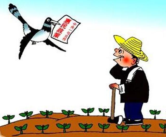 农产品价格险让农民不再犯愁 政策仍需完善