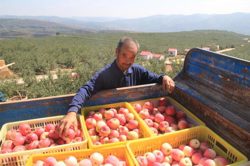 放眼静宁果区市场预估全国苹果价格走势