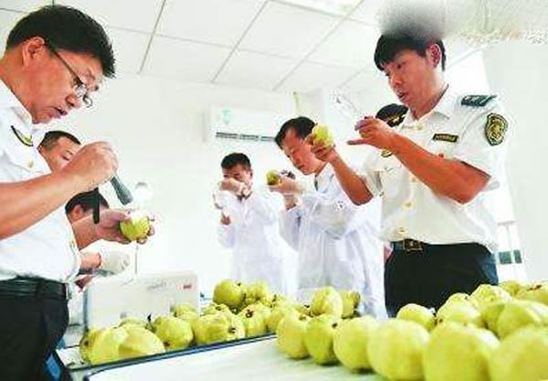 广东深圳:161斤非法入境水果被截获