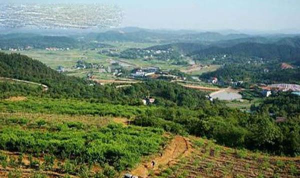 湖南长沙:先进标准带动水果产业发展
