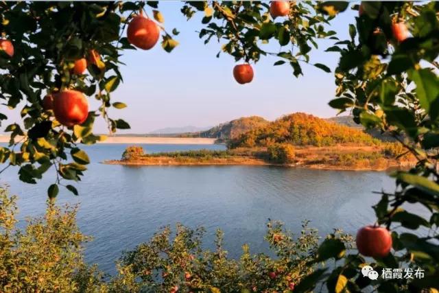 第十六届栖霞苹果艺术节今日开幕 昨日举行媒体见面会