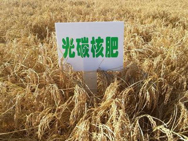 """光碳核肥:农业增效农民增收的""""秘密武器"""""""