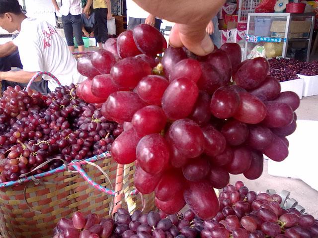 桂林葡萄荣获地理标志产品称号