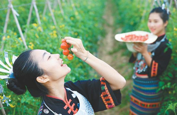 海南陵水县无土种瓜果、蔬菜上了架