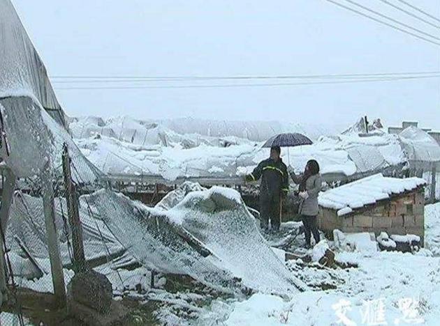 暴雪影响冬储运输运费上调煤炭 化肥价格将何去何从?