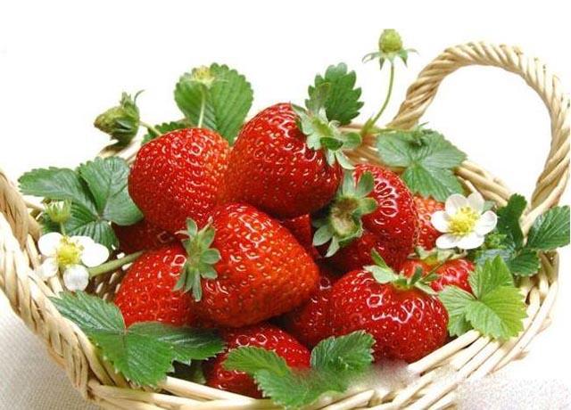 上海市:浦东草莓评比中获金奖