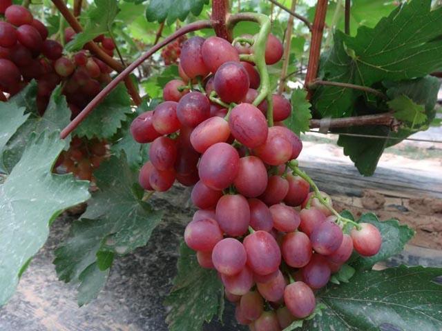 海南:冬季时令水果热销