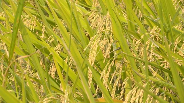 我国农作物种子监管已实现省市县三级全覆盖