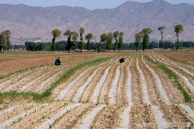 今后在农村土地流转是必然趋势,在这过程中有些问题一定要注意! ...