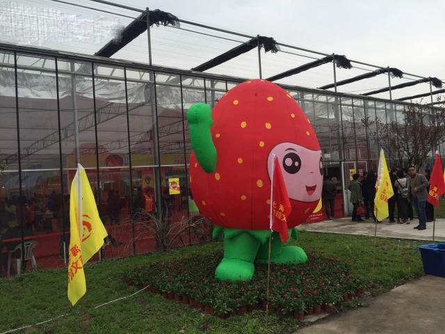 上海青浦:白鹤草莓文化节开幕