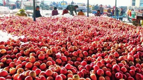 果价连续几年下跌  中国苹果这是怎么了?