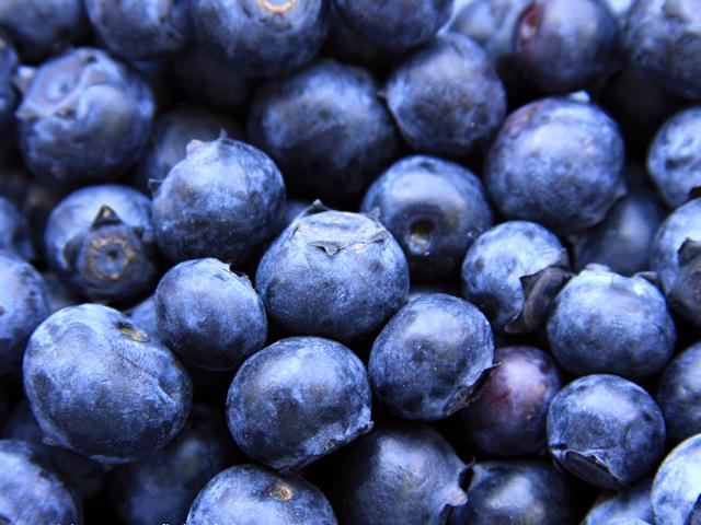 大连蓝莓开始大量上市