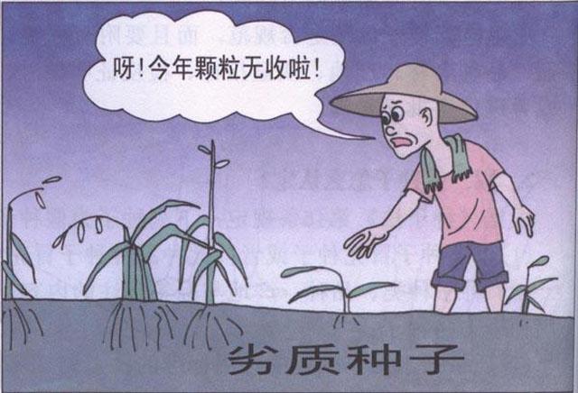 """农业农村部谈种业发展:呈现""""四个显著""""打牢安全根基"""