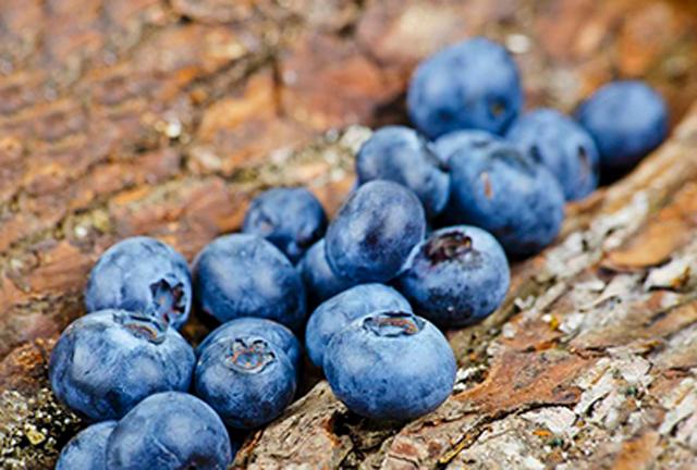 广西柳州:蓝莓开园抢鲜上市