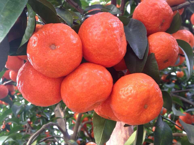 广西桂林:农产品地理标志登记产品继续增加