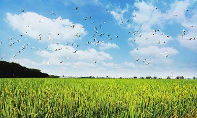 """农业农村部:""""双新双创""""为乡村带来蓬勃活力"""