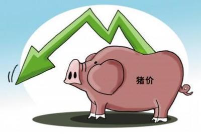 猪价震荡微跌 区域差异明显