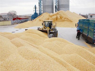 国家粮食与物资储备局:进一步做好秋粮收购工作切实提高为农服务水平 ...