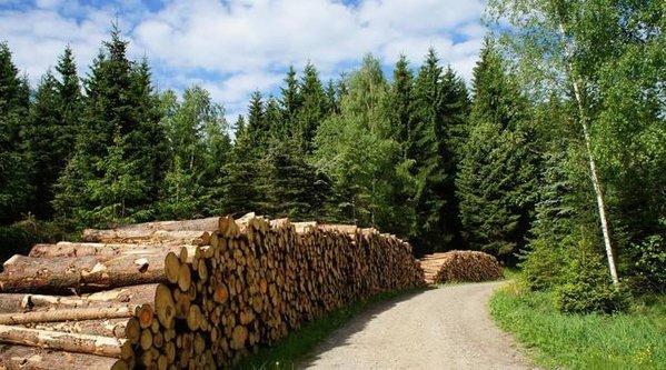 2018年我国林业产业总产值达7.33万亿元