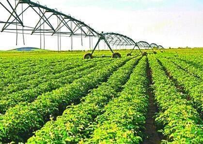发展现代农业要让小农跟得上