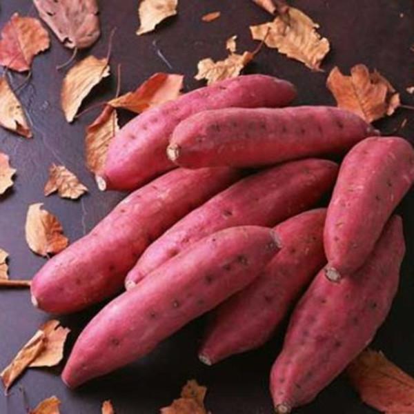 """山东胶州优质红薯制品成为""""胶味领鲜""""样板"""