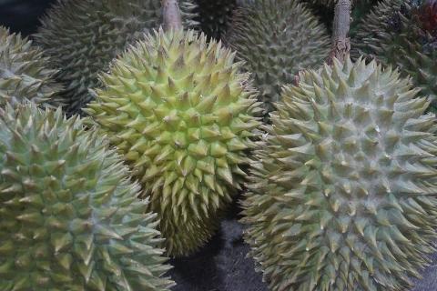 泰国榴莲价格高于去年同期 提高卫生标准保护出口市场