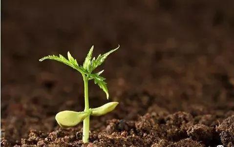 当前我国生物农药市场现状如何?发展前景全面分析