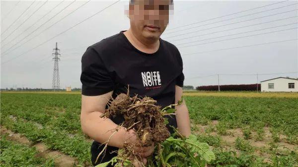 """假农药致损500万,近千亩几乎绝产!售假""""惯犯""""还在逍遥"""