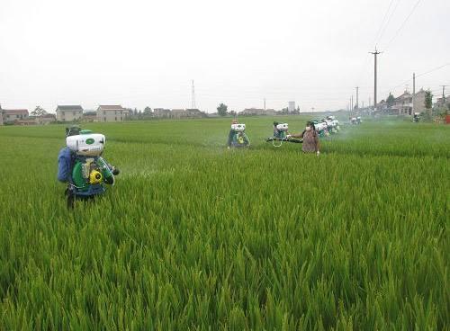 山东将严查这些农药的使用情况,有禁用农药,还有常规农药 ...