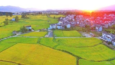 农村土地将不再与户口挂钩,土地进入严管期,这三种情况将严惩 ...