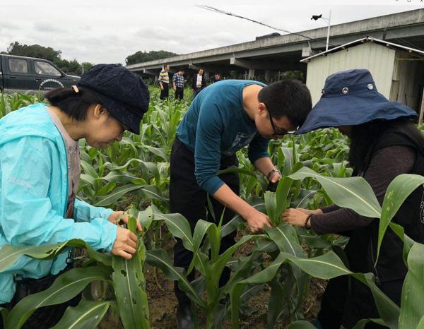 综合防治农业外来入侵物种保障生态安全