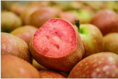 黄皮红肉KISSABEL万博手机版ios收获季到来 今年有望进入中国市场
